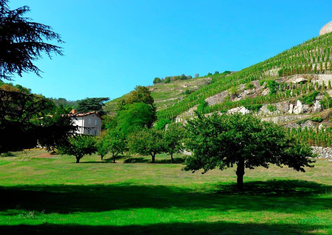 Photo 1 - Domaine Georges Vernay
