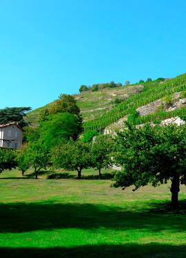 Domaine Vernay