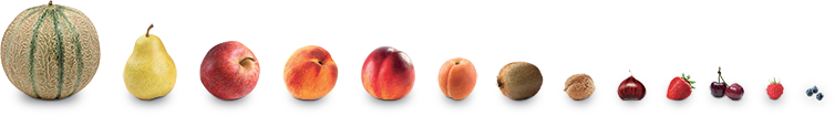 Fruits Vallée Rhône